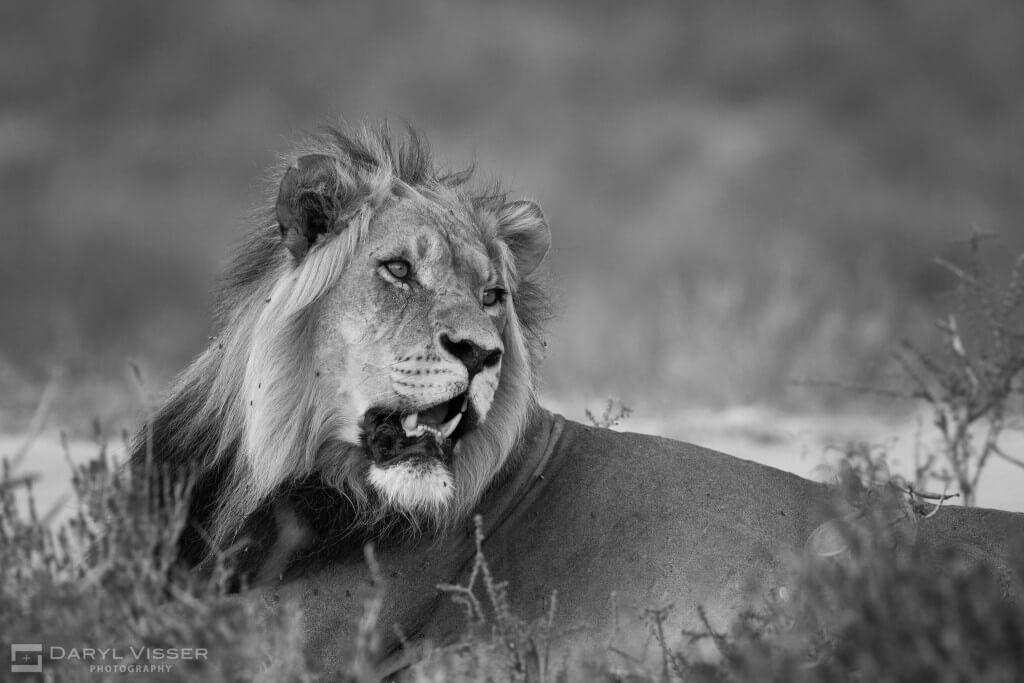 1 night hluhluwe imfolozi safari