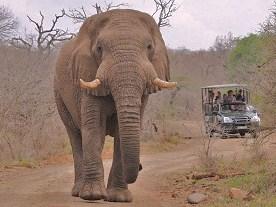 umfolozi game reserve elephant
