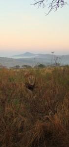 Hluhluwe Game Reserve Safaris with Heritage Tours & Safaris