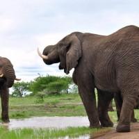 hluhluwe game reserve zululand