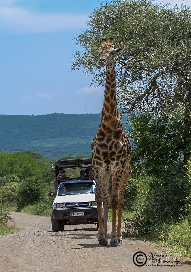 Hluhluwe Umfolozi Safari Options
