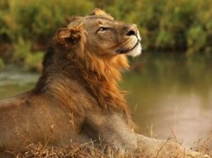 9 day kruger park safari