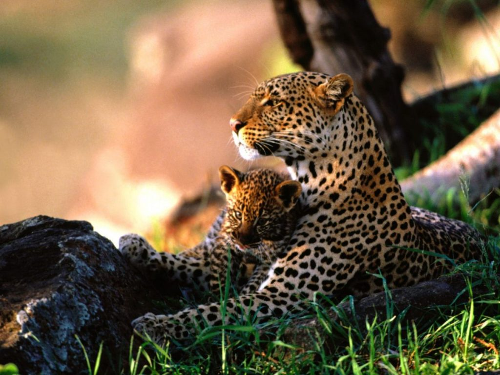 Hluhluwe Umfolozi Day Safari Options 8
