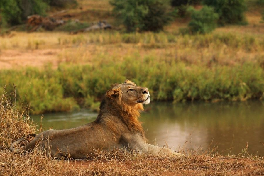 Hluhluwe Umfolozi Day Safari Options