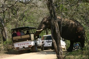 Big 7 Safari Holiday Package 1