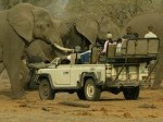 Book a Safari Direct & Save