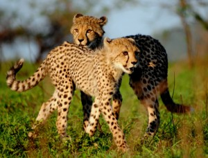 umfolozi safari