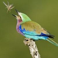 hluhluwe game reserve birding
