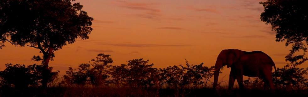 Hluhluwe Umfolozi Game Reserve 2