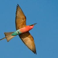 hluhluwe game reserve birds