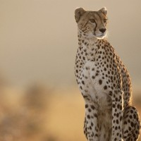 4 Day Zululand Safari