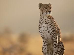 4 Day Zululand Safari