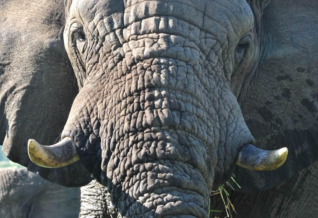 Day Safaris in and Around Zululand 3