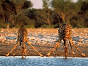 7 day exclusive kwazulu natal south africa safari