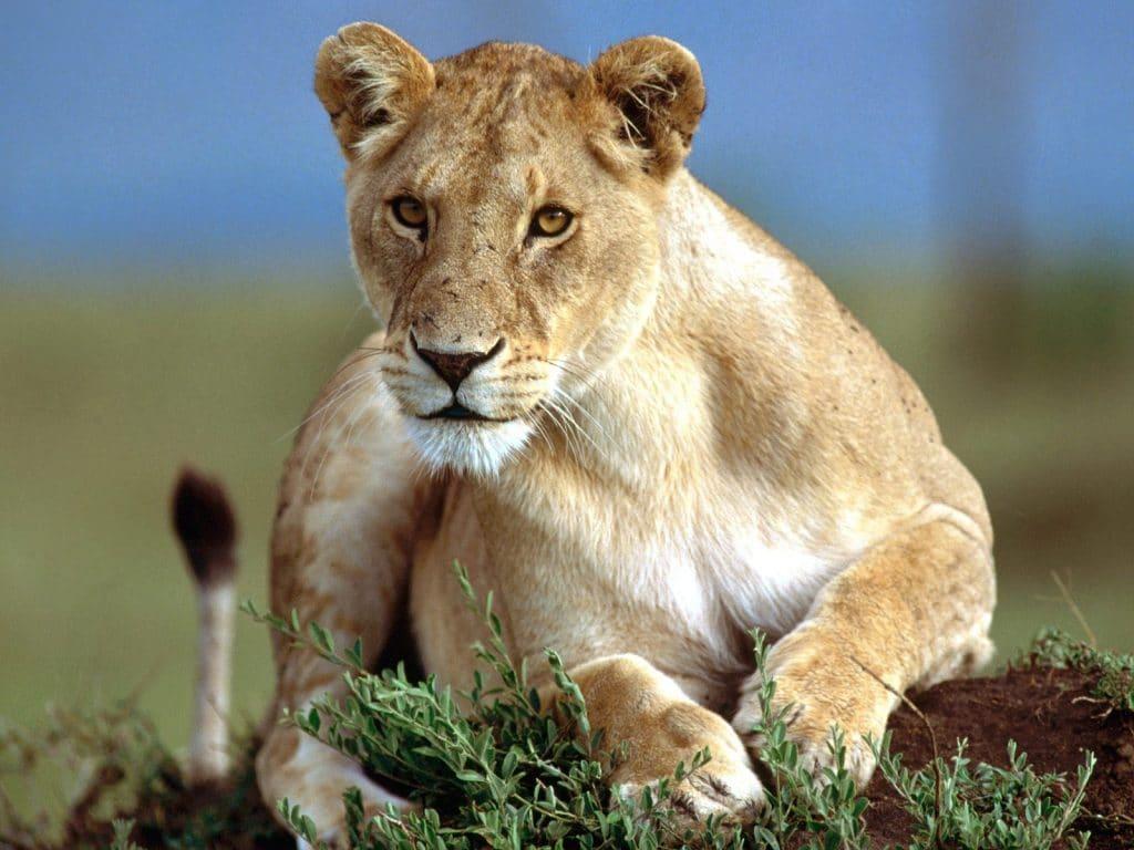 Safari KwaZulu Natal South Africa