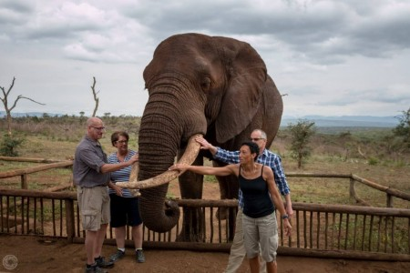 south africa Elephant Interaction