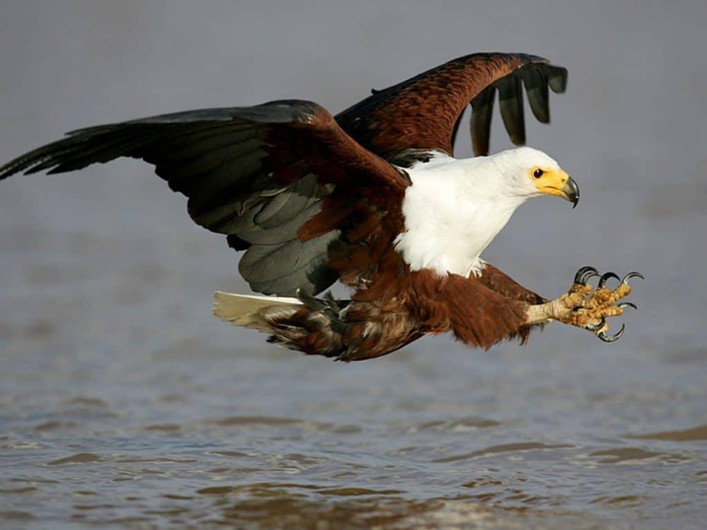 fish eagle wetland park