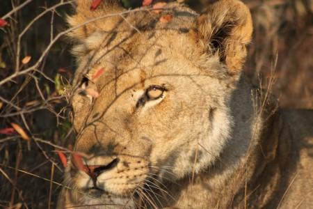 9 day Kruger Park