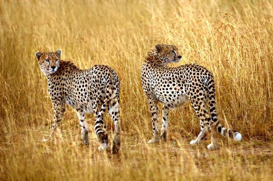hluhluwe imfolozi game reserve chetha