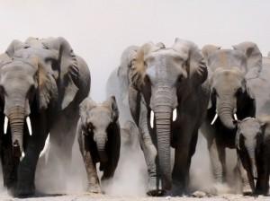 safari packages hluhluwe umfolozi game reserve