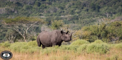 Rhino in the game park