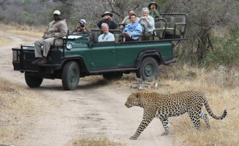 south africa safaris cape town