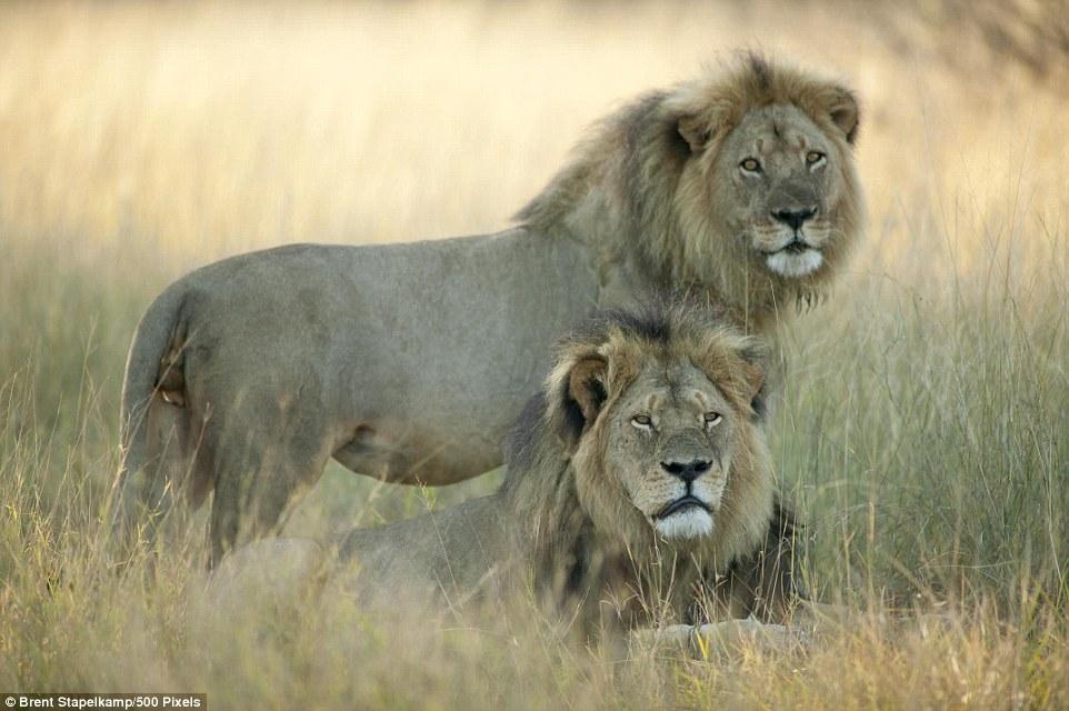 cecil the lion shot