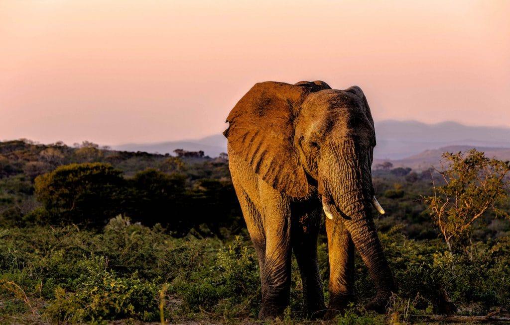 safari packages hluhluwe-imfolozi park