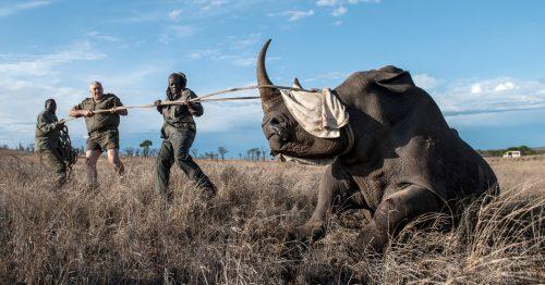 imfolozi oparation Rhino