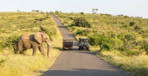 hluhluwe self drive safaris
