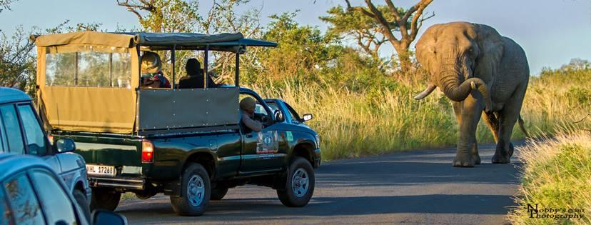 umfolozi self drive safaris