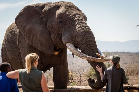 hluhluwe elephant interaction