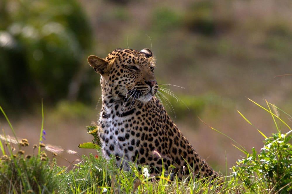 big 5 animals south africa