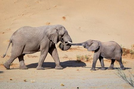 The Great Elephant Debate To allow hunting or not?