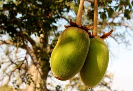 baobab fruit drink