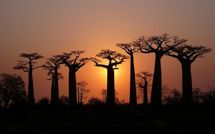 baobab tree south africa